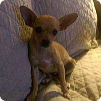 Adopt A Pet :: Lexus-pending - Glastonbury, CT