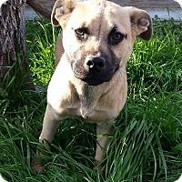 Adopt A Pet :: Mystic - Buchanan Dam, TX