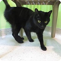 Adopt A Pet :: Ulysses - Janesville, WI
