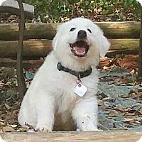 Adopt A Pet :: Quill - Kyle, TX
