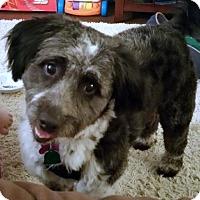 Adopt A Pet :: Gizmo - Albany, NY