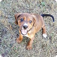 Adopt A Pet :: Cha Cha - Duluth, GA