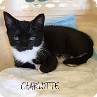 Adopt A Pet :: CHARLOTTE - Great Neck, NY