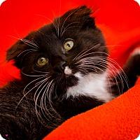 Adopt A Pet :: Charlotte - Colorado Springs, CO