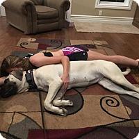 Adopt A Pet :: CALIFORNIA, DAVIS; 'NALA' - Little, Rock, AR
