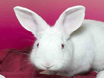 Other/Unknown for adoption in Alameda, California - BUN BUN