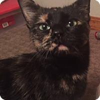 Adopt A Pet :: Mora - Colorado Springs, CO