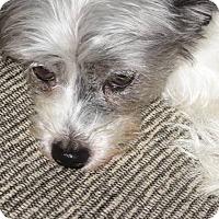 Adopt A Pet :: SASSY - Eden Prairie, MN