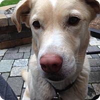 Adopt A Pet :: Daisy aka Princess Diana - Grafton, WI