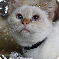 Adopt A Pet :: George - Mayflower, AR