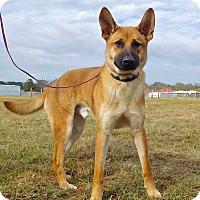 Adopt A Pet :: Bobby - St. Francisville, LA