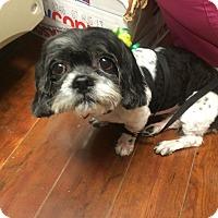 Adopt A Pet :: Ingrid - Oak Ridge, NJ