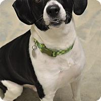 Adopt A Pet :: Rocky - Kalamazoo, MI