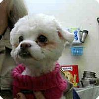 Adopt A Pet :: URGENT 01/13 BIG BEAR - San Bernardino, CA