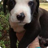 Adopt A Pet :: Issac - Centerville, GA