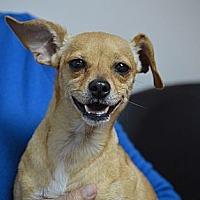 Adopt A Pet :: Chole Chapman - Hooksett, NH