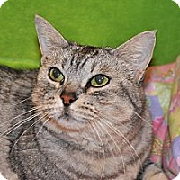 Adopt A Pet :: Carly - Foothill Ranch, CA