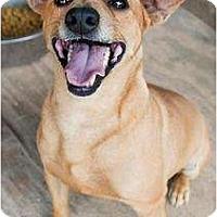 Adopt A Pet :: Bo - Huntersville, NC