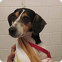 Adopt A Pet :: Trixie - West Bridgewater, MA