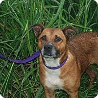 Adopt A Pet :: Felicity - Albany, NY