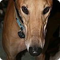 Adopt A Pet :: Burning Kolby