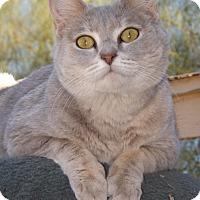Adopt A Pet :: Minky - Mesa, AZ