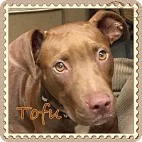 Adopt A Pet :: TOFU - EDEN PRAIRIE, MN