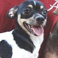 Adopt A Pet :: Timmy - Marion, AL