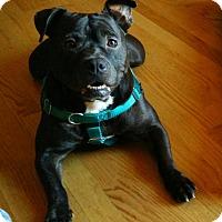 Adopt A Pet :: Bunchie - Villa Park, IL