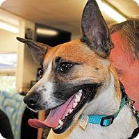 Adopt A Pet :: Fiona - Shelter Island, NY