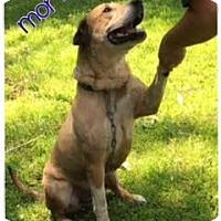 Adopt A Pet :: Morty - Courtesy Listing - Wilmington, DE