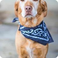 Adopt A Pet :: Sadie Angel - Salt Lake City, UT