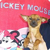 Adopt A Pet :: Moxie - Oviedo, FL