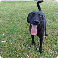 Adopt A Pet :: Oxford - Lufkin, TX