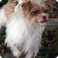Adopt A Pet :: Elana - Bridgeton, MO