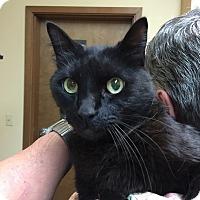 Adopt A Pet :: Mr. Teddy - McKenna, WA
