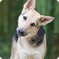 Adopt A Pet :: Luna - Charlotte, NC