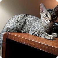 Adopt A Pet :: Max - McCormick, SC