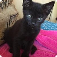 Adopt A Pet :: Billy - New York, NY