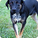 Adopt A Pet :: Jake