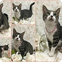 Adopt A Pet :: Honesty - Joliet, IL