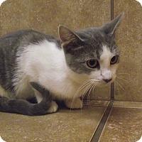 Adopt A Pet :: Pam - Appleton, WI