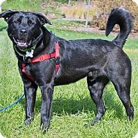 Adopt A Pet :: Jack Daniels - An litter (HP) - Livonia, MI