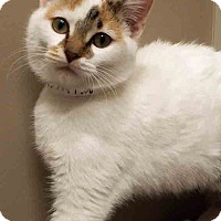 Adopt A Pet :: Mary Jane - Downers Grove, IL