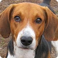 Adopt A Pet :: MAJOR - Gloucester, VA