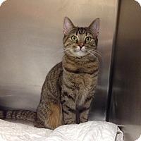 Adopt A Pet :: B-6 Lucy - Triadelphia, WV