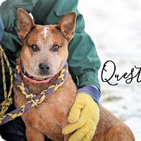Adopt A Pet :: Quest - Joliet, IL
