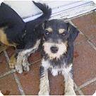Adopt A Pet :: Jordan & Tanner