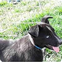 Adopt A Pet :: Thurman - Meridian, ID