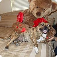 Adopt A Pet :: BRANDY - Phoenix, AZ